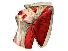 Patologias do Ombro - Manguito Rotador
